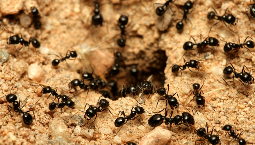 How Does an Ant Build Its Hill