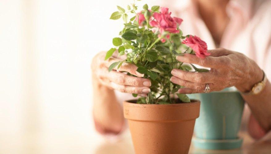 Usa pegamentos para superficies porosas cuando trabajes con macetas.