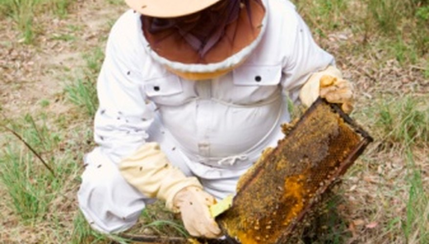 The loss of bee colonies is already having an economic impact on humans.
