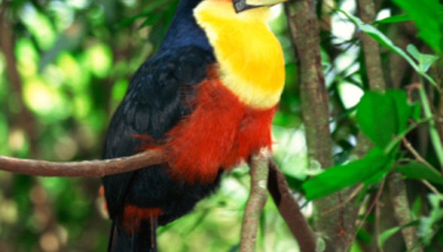 The number of animals and plants found in the rain forests of Central America is remarkable.