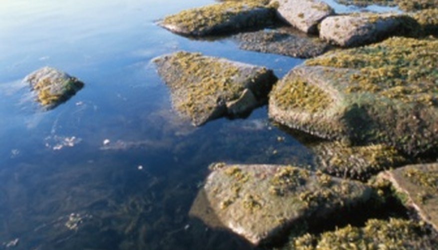 Algae can contribute to water's turbidity.