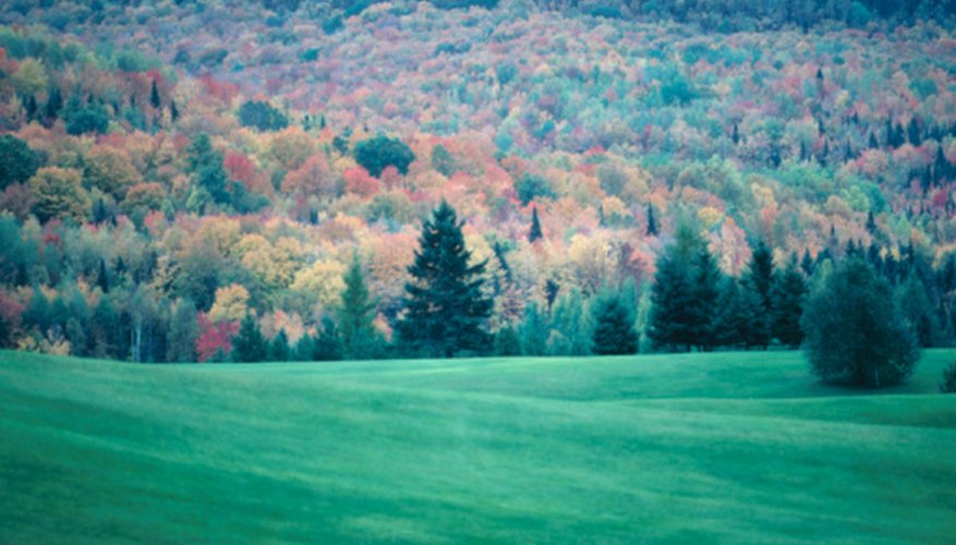 Deciduous forests are those in which trees shed their leaves in the fall.