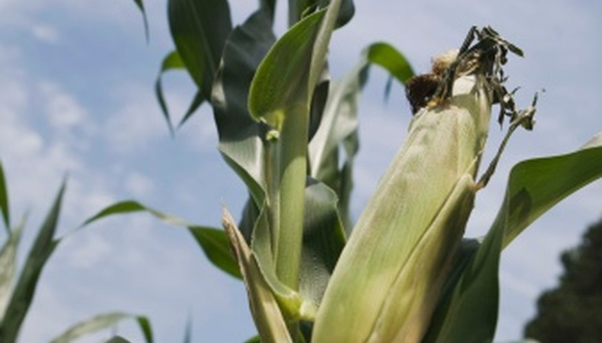 You can make artificial corn stalks from items found at hardware and stationery stores.