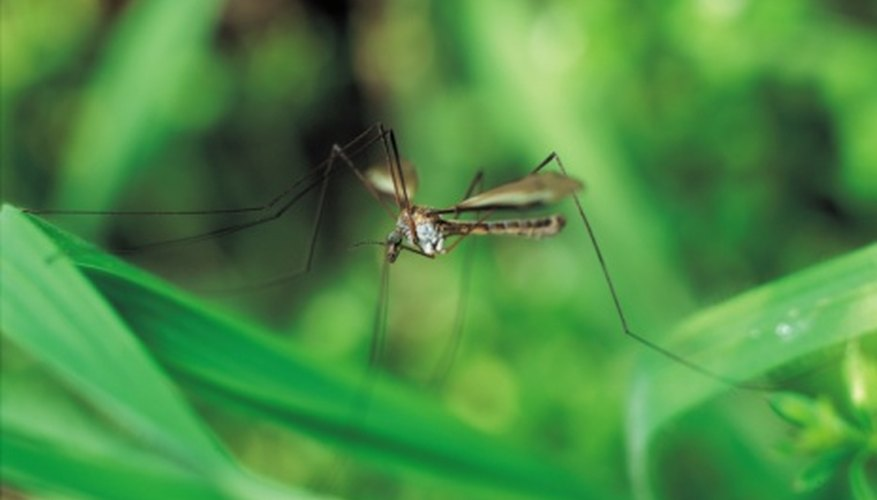 Mosquitoes may be overwhelming your landscape if you have a neglected pool.