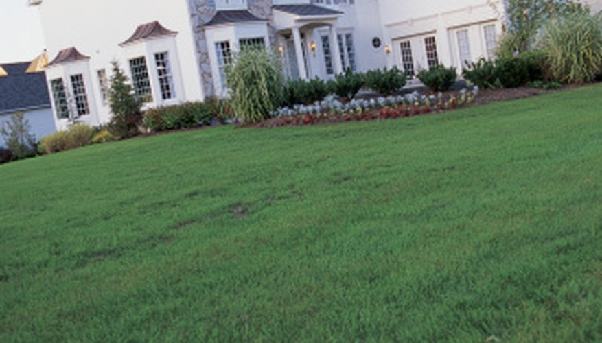Iron helps keep your lawn dark green.