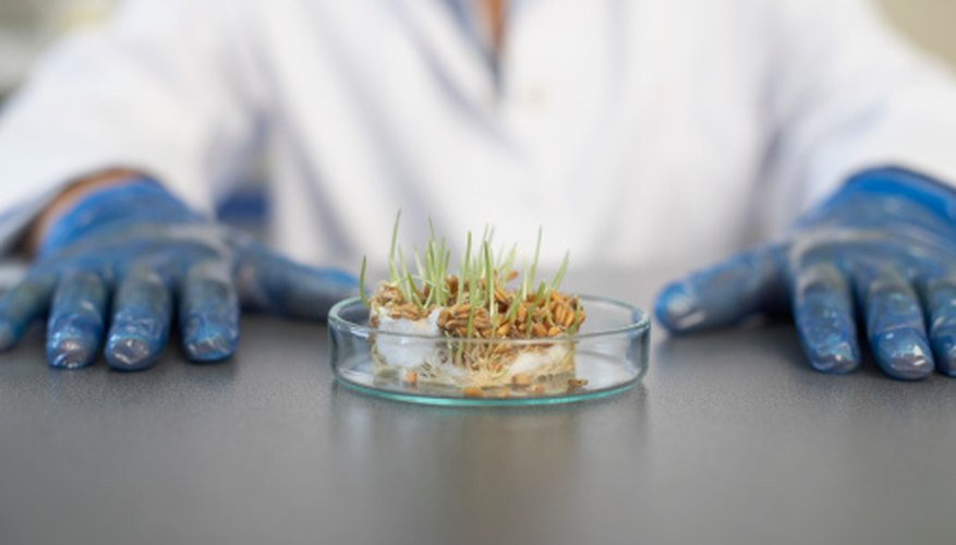 GMO experiments are a useful educational tool for science classes.
