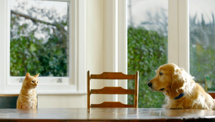 Dogs can help in working as a squirrel deterrent for farmers and gardeners.