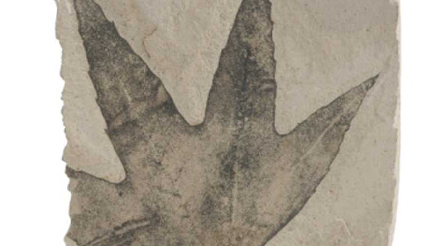 Leaves are often preserved as carbon film fossils.