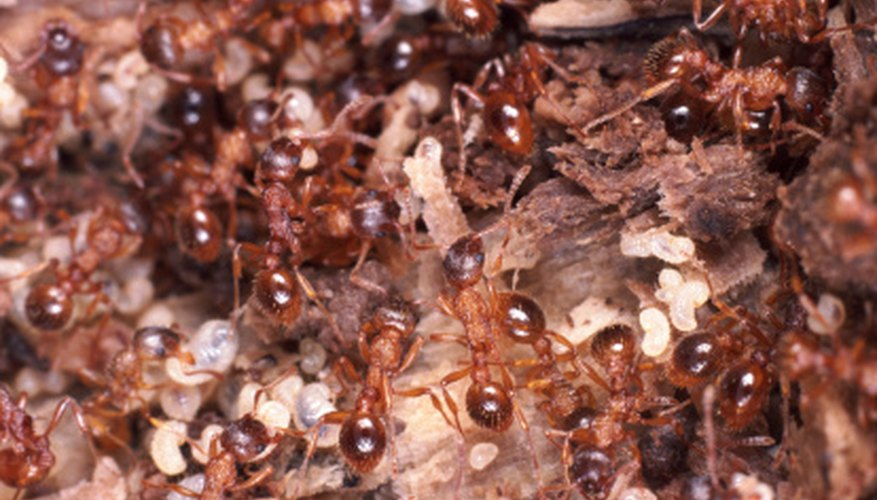 Get rid of ants looking for water on your property.