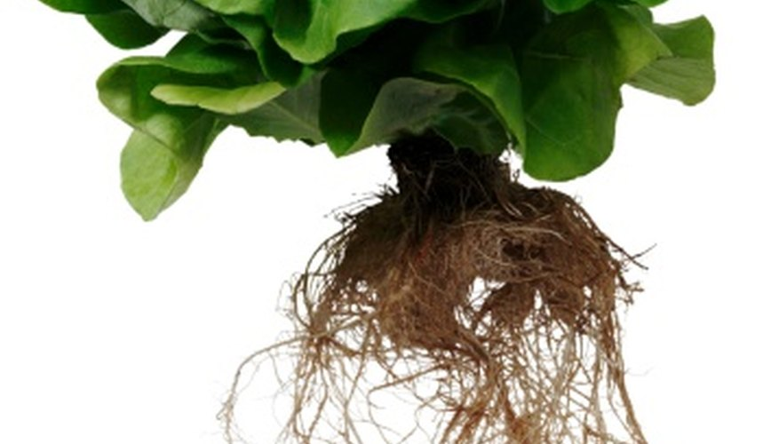 Making your own hydroponic set-up can save you money.
