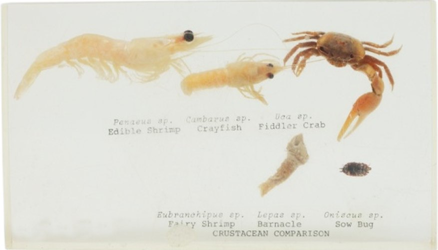 Shrimp are actually capable of living in many different aquatic environments