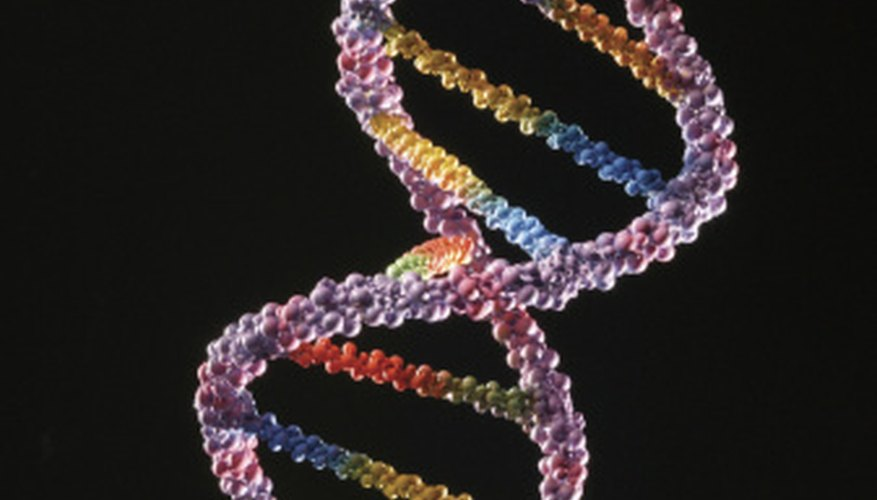 Nucleotides in DNA pair up to form a double helix.
