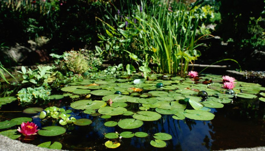 Remove muck from your garden pond.