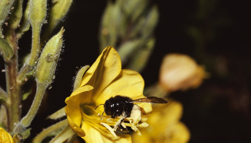 Natural Repellents for Carpenter Bees | Garden Guides