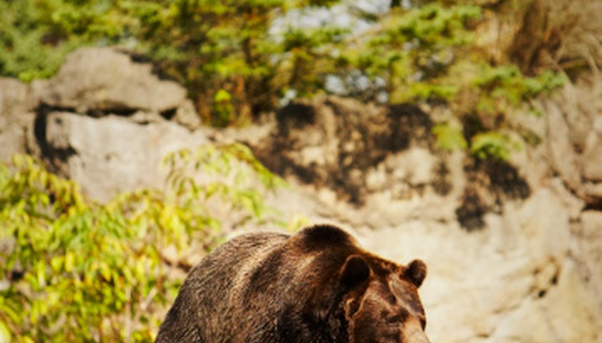 Look for bear images online.