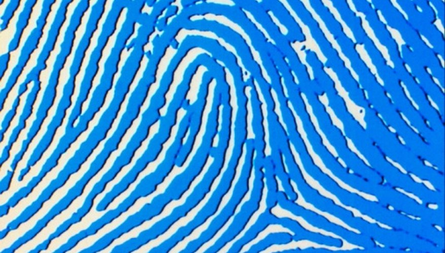A radial loop pattern fingerprint