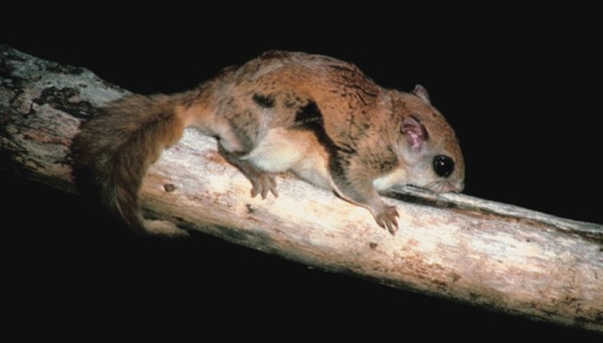 Flying squirrels inhabit all of Ohio.