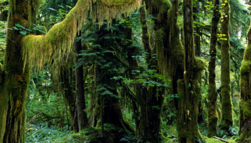 tropical rain forest biome landscape features sciencing