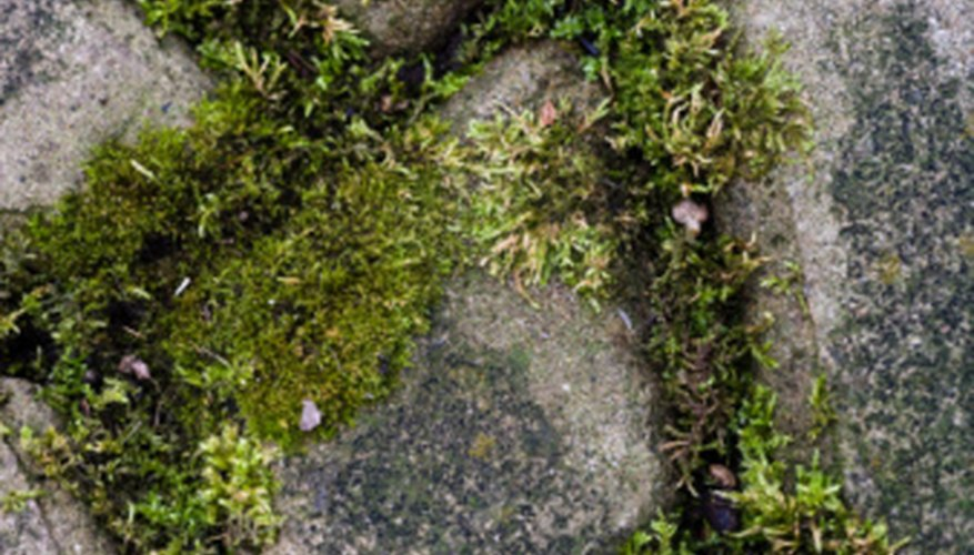 Moss grows well even on difficult terrain.