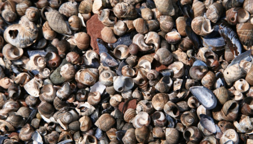 Clean your seashells before adding them to your collection.