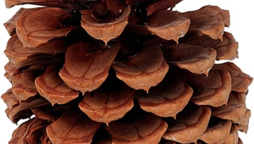 Scented pine cones can brighten your home during the holidays.