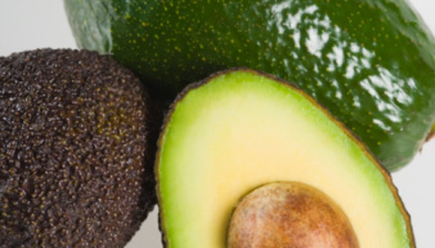 Healthy avocado trees produce a prolific harvest.