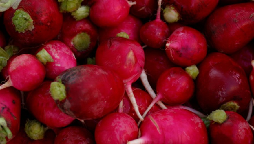 Prepare radishes for storage immediately after harvest.