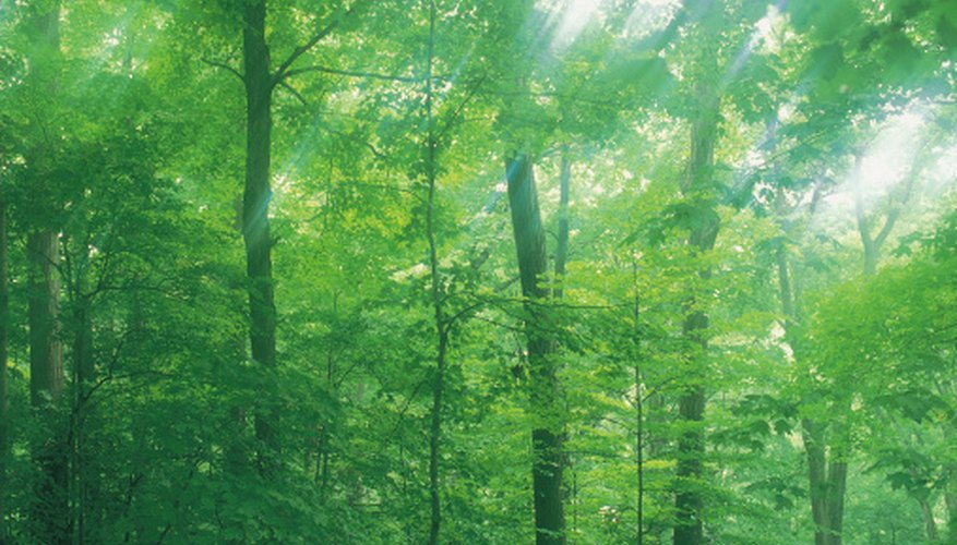 Forests offer opportunies to hike, camp or just explore the outdoors.