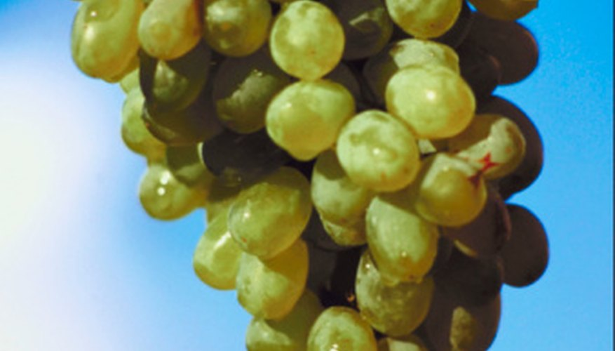 There are a variety of grants related to grapes.