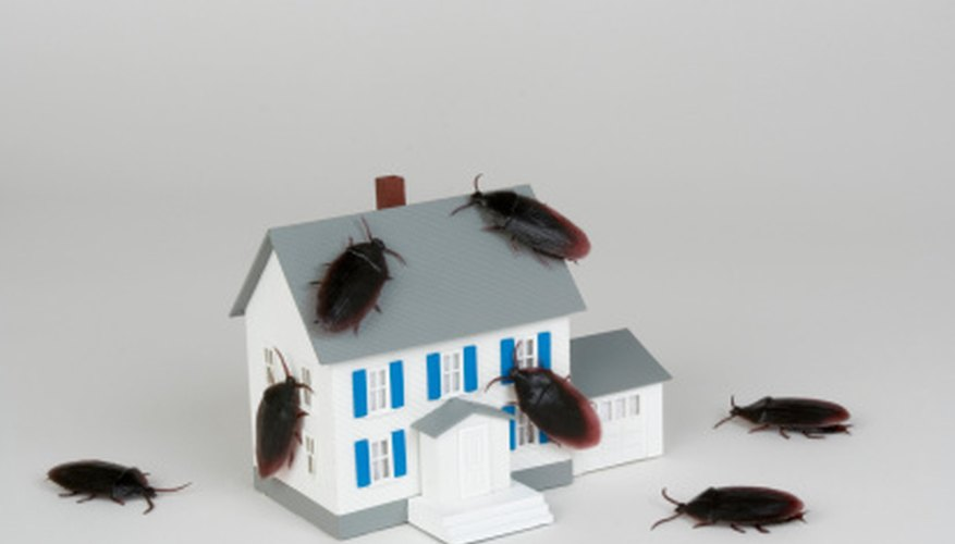 Don't let bugs invade your home.