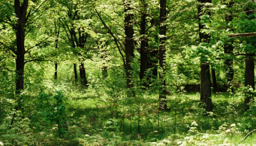 Many types of plants coexist as part of a forest ecosystem's most obvious biotic factors.