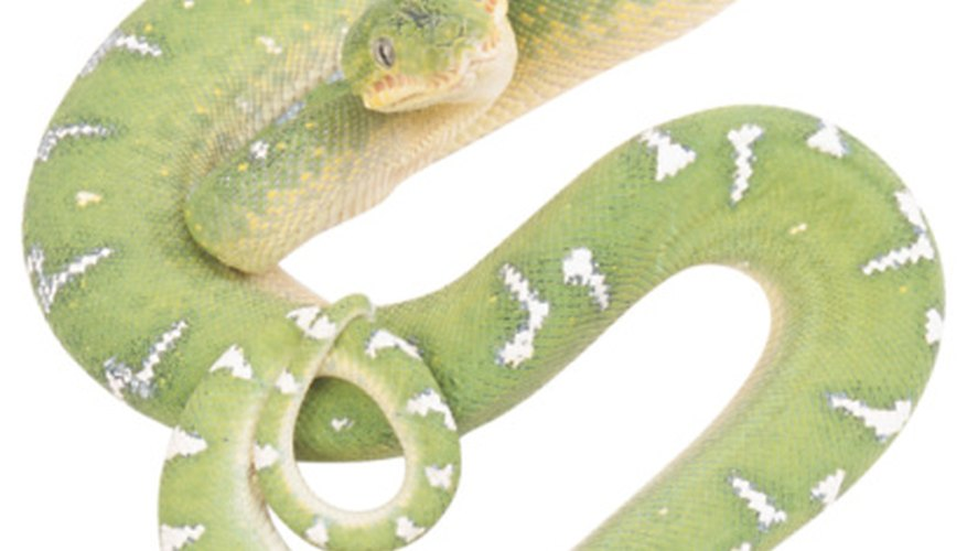 Forest snakes often have a green color to blend with their environment.