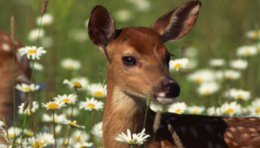 Deer are primarily the concern of biology, though the individual cells in the deer might be studied by a microbiologist.