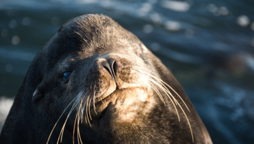 As a vet treating marine mammals, your salary is comparable to companion animal and other vets.