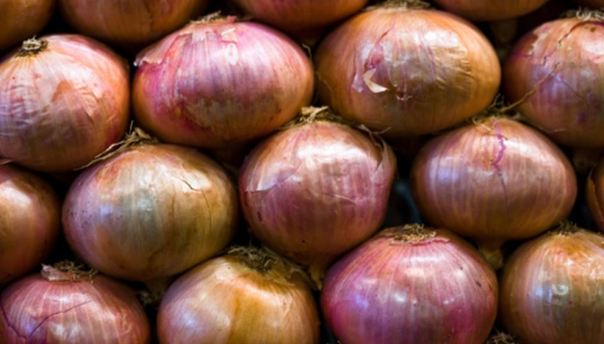 Onions should be stored in the refrigerator or cold storage.