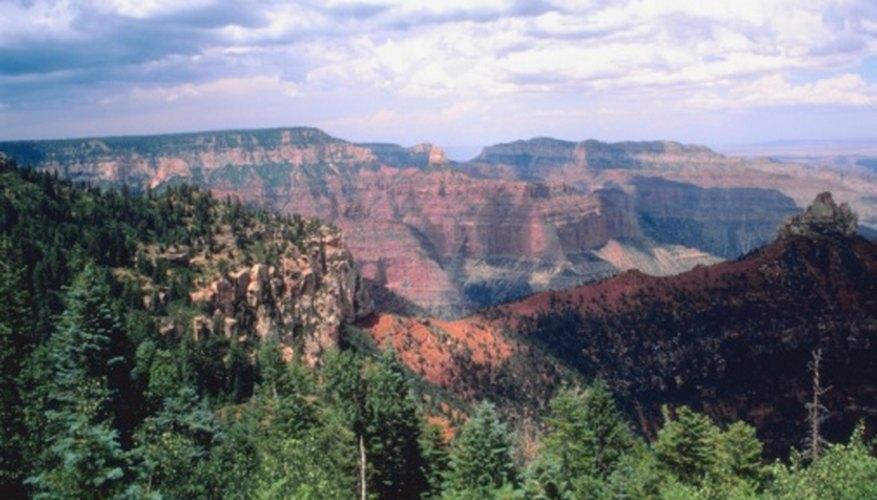 Ponderosa pine forests grow on the Colorado Plateau in Arizona.
