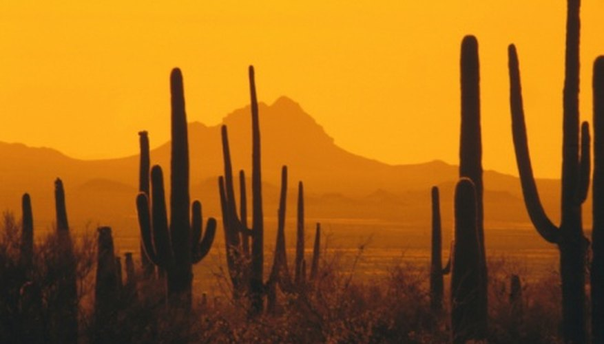 Key features of American deserts are cacti.