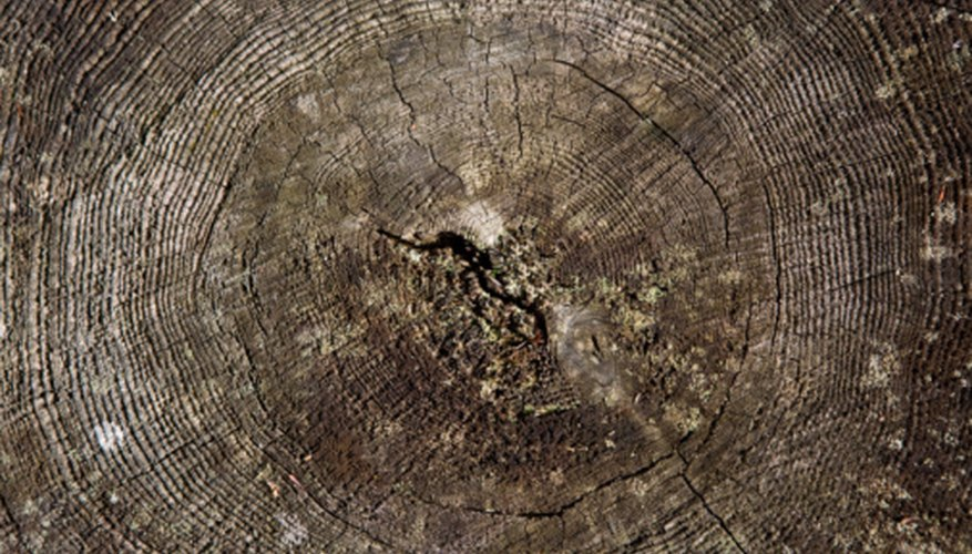 Tree rings can provide a valuable method to date past events.