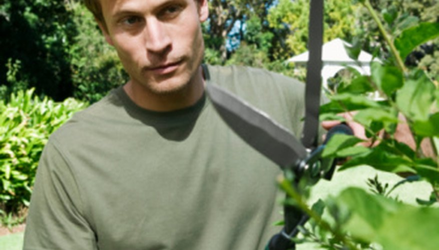 Pruning trees can help prevent disease and pest problems.