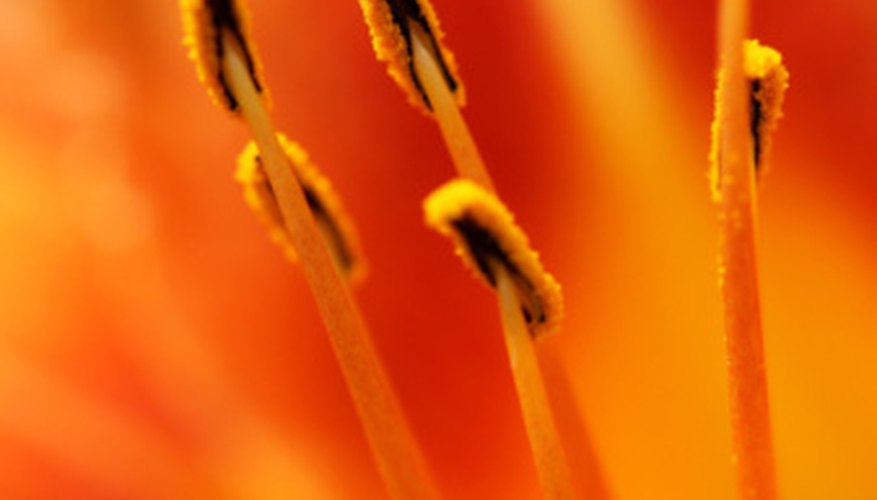 Stamens are the pollen-bearing part of the flower.
