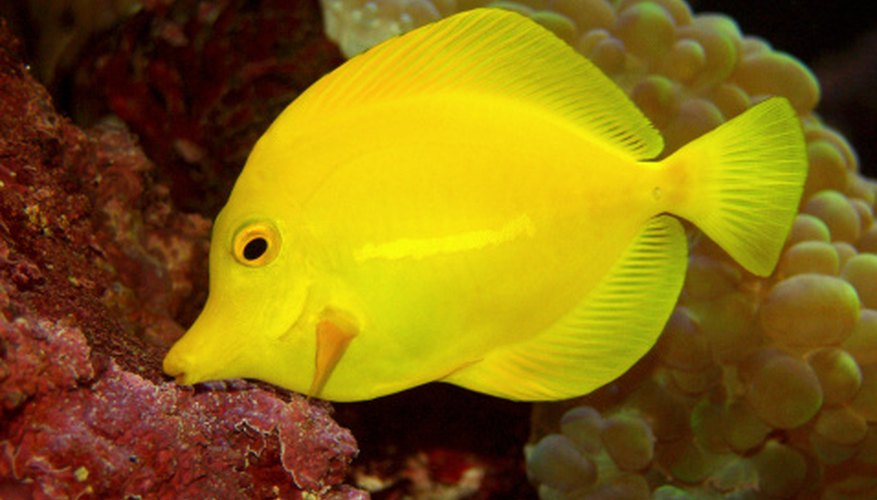 Coral reefs are home to many brightly colored fish as well as to octopus and sea urchins.