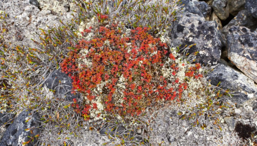 Lichens can live in some of the coldest, driest places on Earth.