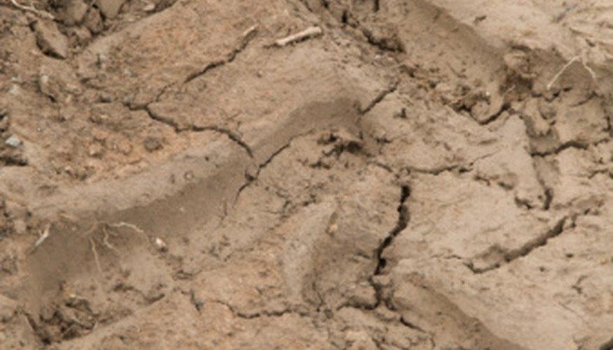 El tipo de estructura de agregado del suelo influye en el crecimiento de las plantas.
