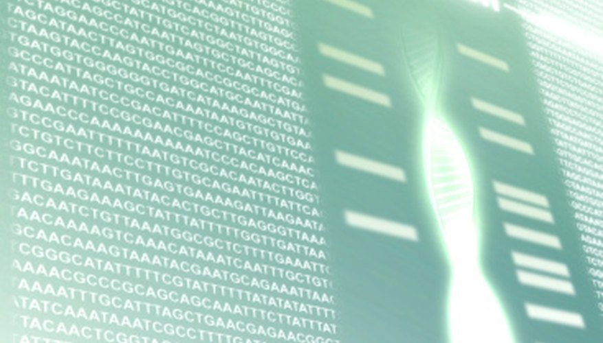 How you analyze your gel results will depend in part on what you're looking for.