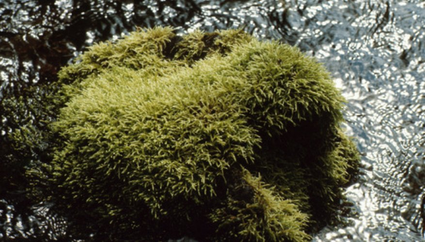 Mosses colonize rocks in damp locations.