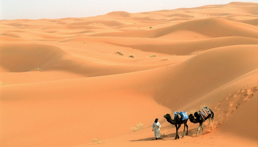 The Sahara Desert is an example of an arid subtropical zone.