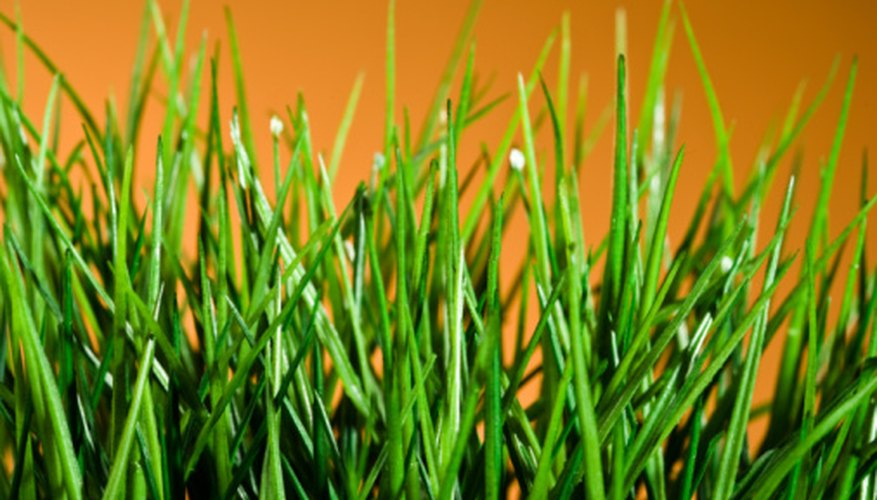 A healthy lawn is often the result of applying the properly calculated amount of fertilizer.