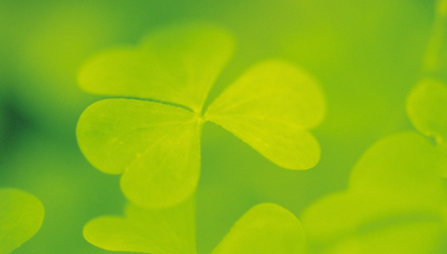 The shamrock is a Christian symbol for the Holy Trinity.