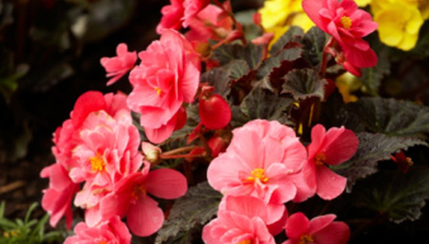 Enhance the landscape with an all-season flower garden.
