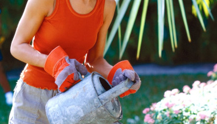 Use a garden sprayer or watering can to disperse the nematodes.